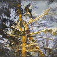 Лесной ТОТЭМ :: Андрей Зайцев