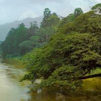 Жёлтая река. :: Edward J.Berelet