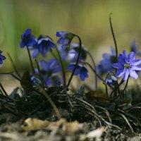 Весна-весна :: Инна Кравченко