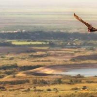 как прекрасен этот мир... :: svabboy photo