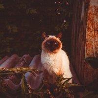 Вечерний кот :: Дмитрий Костоусов