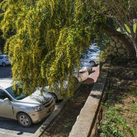 Весна в Израиле :: Эмиль