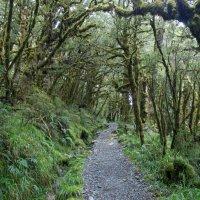 Лес в Новой Зеландии :: Irina Shtukmaster