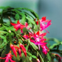 Цветы :: Виктор Куприянов