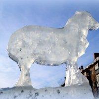 Стойкий ледяной барашка)) :: Андрей Заломленков