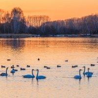 Вечер на озере. :: Галина Шепелева