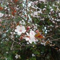 Весна :: Марина Кит