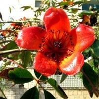 Цветок Сэйбы :: Герович Лилия