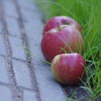 яблочное настроение :: Ксения смирнова