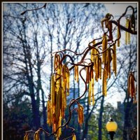 Гирлянды в парке :: Alexander Andronik