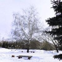 В ожидании весны :: раиса Орловская