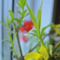 весна на подоконнике :: татьяна