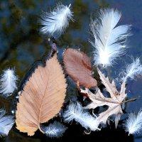 Листья и перышки на воде :: Асылбек Айманов