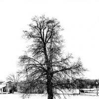 Одинокая липа :: Viacheslav