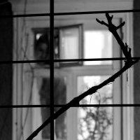 в окне.... :: Светлана Прилуцких