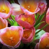 Тюльпанов букет :: Alexander
