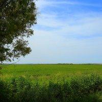 поле ... :: ALEX KHAZAN