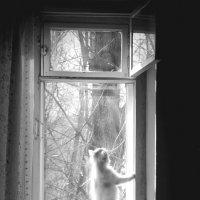Белка и окно. :: Виталий Виницкий