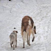 Мать и дитя. Первая прогулка :: Александр Юдин
