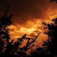 Закат в облаках сквозь ветви деревьев :: Сергей Тагиров
