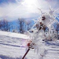 Морозные цветы :: Наталья Боярко