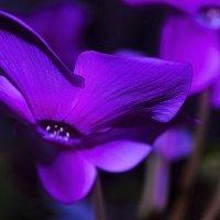 орхидея :: Марина