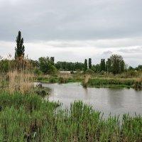 Сельский пейзаж :: Андрей Майоров