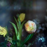 весенние тюльпаны :: Светлана Ясевич