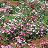 Цветы Индии Висячие Сады Мумбаи :: maikl falkon