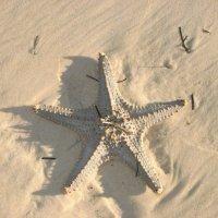 Все звезды меркнут перед этой звездой :: Антонина
