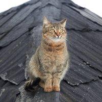 тише  мыши кот на крыше :: Седа Ковтун