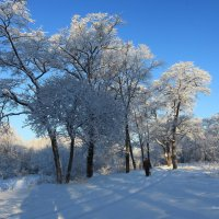 В лесу ,после снегопада. :: Валентин Репин