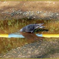 Глоток воды из лужи золотой.. :: Андрей Заломленков