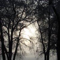 Сумерки. Дорожка в зимнем парке. :: Сергей Тагиров