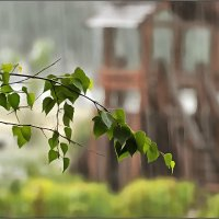 дождь :: Владимир Беляев ( GusLjar )