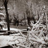 Последний вздох зимы 3 :: Сергей Шруба