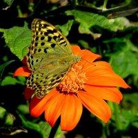 Титония и бабочка :: Svetlana Baglai