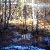 В лес весна пришла! :: Алексей Бажан