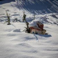 ну когда-же снег растает? :: Сергей Говорков