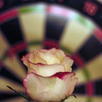rose :: Sasha Bobkov