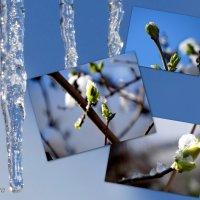Волшебная весна... :: Тамара (st.tamara)