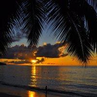 закат под пальмой :: vg154
