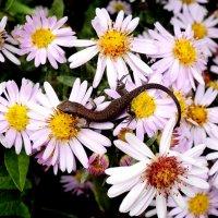 И я люблю цветы!!! :: Светлана Масленникова