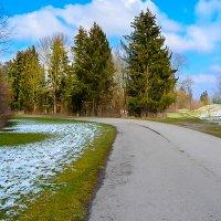 Красота Германских лесов :: Света Кондрашова