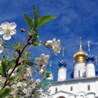 Весна цветущая :: Николай Белавин