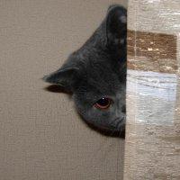 Кошка-1 :: shabof