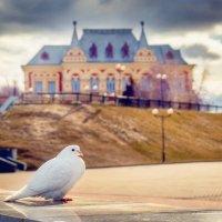птица мира. :: Владимир Мужчинин