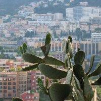 Вид из Садов Святого Мартина на Монако :: Елена Павлова (Смолова)