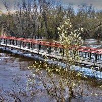 Наводнение :: Алла Рыженко