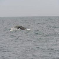 Прощание кита. :: Валерий Давыдов
